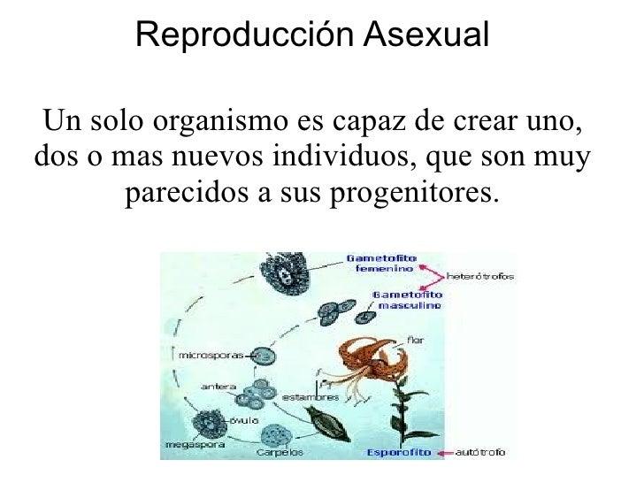 Reproduccion de las medusas asexual