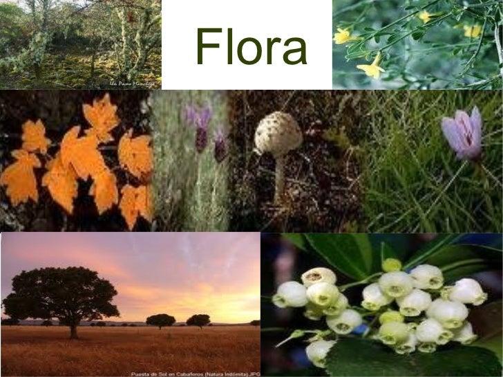 Resultado de imagen de flora tablas de daimiel
