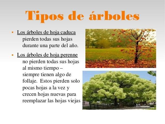 Informaci n sobre los rboles for Arboles de hoja caduca
