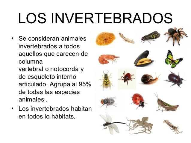 LOS INVERTEBRADOS• Se consideran animales  invertebrados a todos  aquellos que carecen de  columna  vertebral o notocorda ...