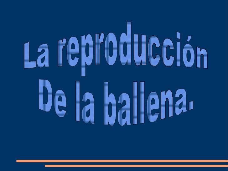 La reproducción  De la ballena.