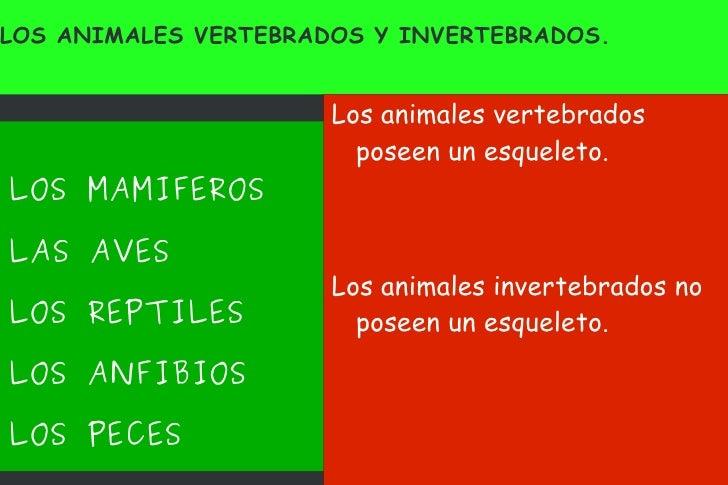 LOS ANIMALES VERTEBRADOS Y INVERTEBRADOS. <ul><li>LOS MAMIFEROS </li></ul><ul><li>LAS AVES </li></ul><ul><li>LOS REPTILES ...