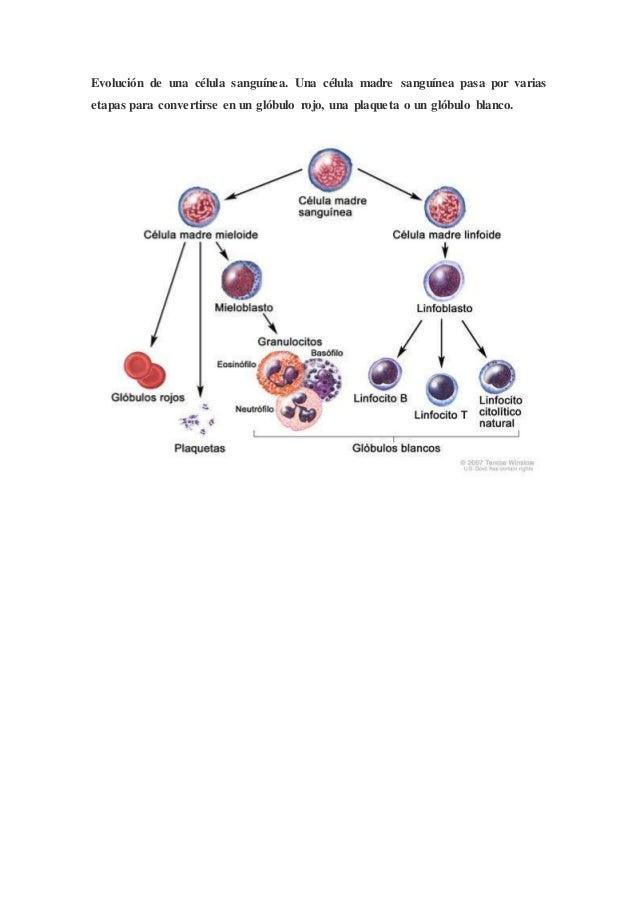 Que preparados al tratamiento sheynogo de la osteocondrosis