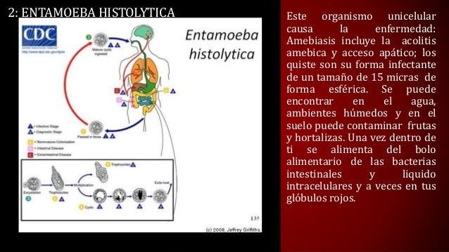 El test de la presencia de los parásitos en el organismo de la persona