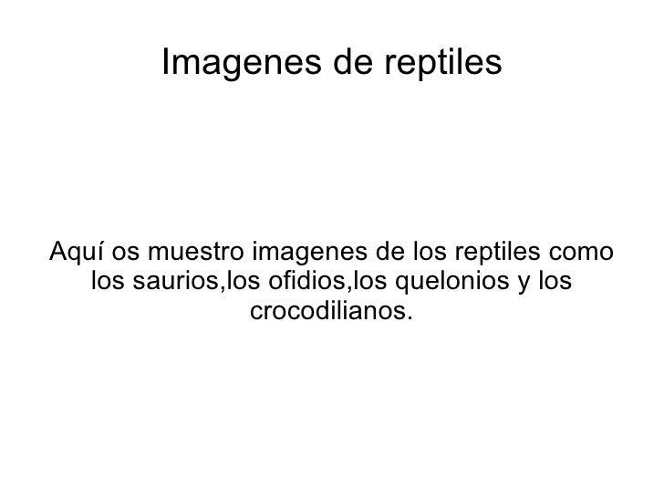 Imagenes de reptiles Aquí os muestro imagenes de los reptiles como los saurios,los ofidios,los quelonios y los crocodilian...