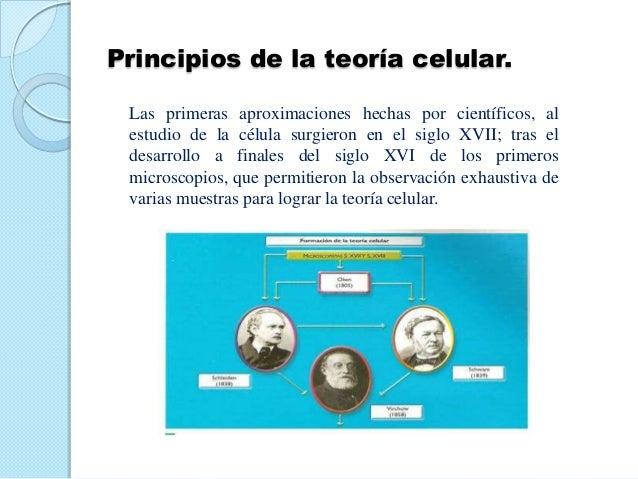 Principios de la teoría celular. Las primeras aproximaciones hechas por científicos, al estudio de la célula surgieron en ...