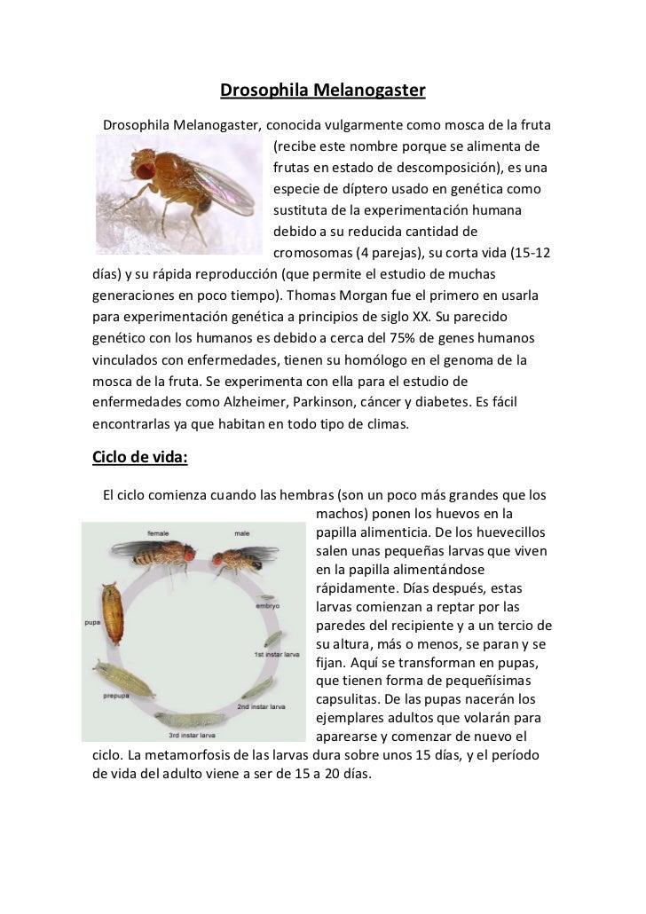 Drosophila_ Sebastian