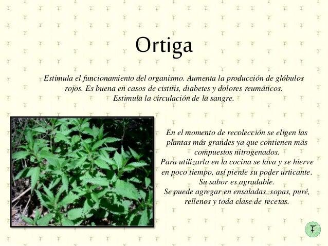 Plantas medicinales en la plaza 25 de mayo for Para q sirven las plantas ornamentales