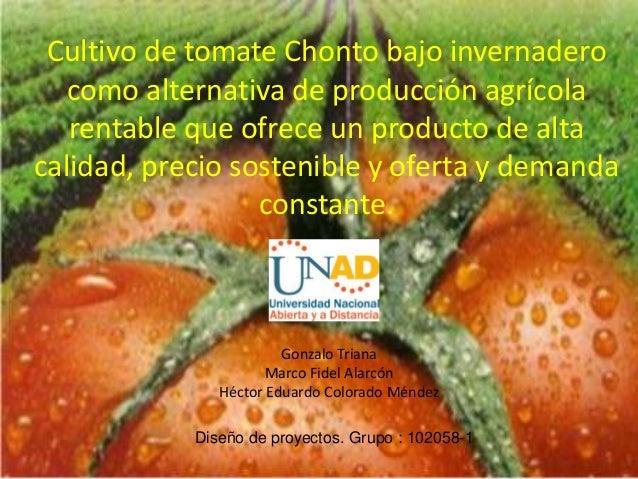 Cultivo de tomate Chonto bajo invernadero como alternativa de producción agrícola rentable que ofrece un producto de alta ...
