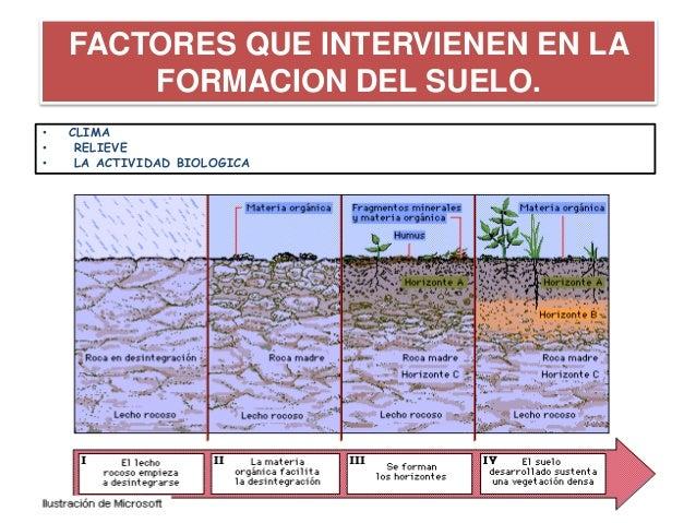 Trabajo final de ecologia for Proceso de formacion del suelo
