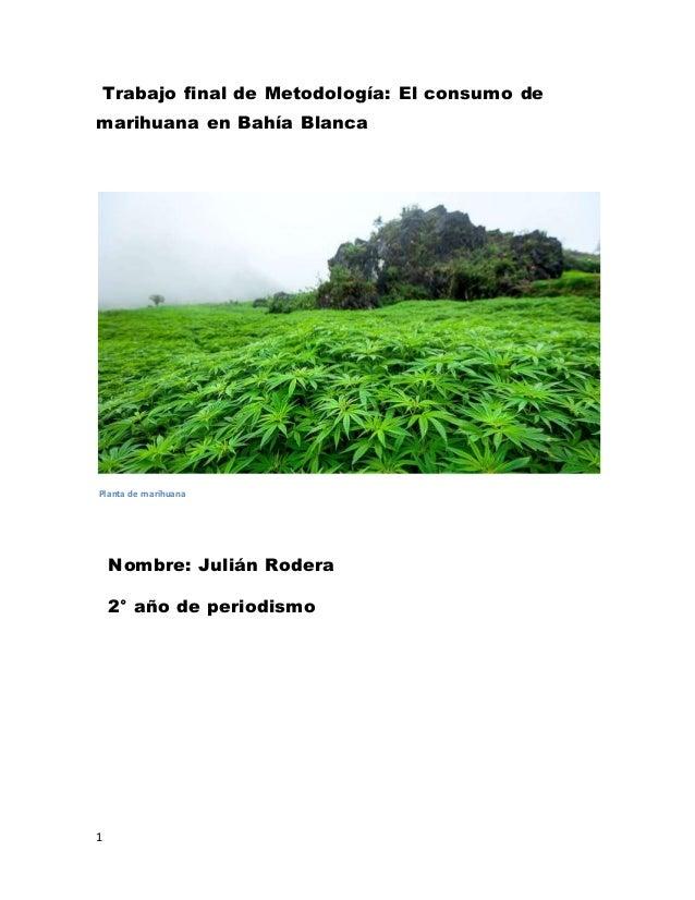 1 Trabajo final de Metodología: El consumo de marihuana en Bahía Blanca Planta de marihuana Nombre: Julián Rodera 2° año d...