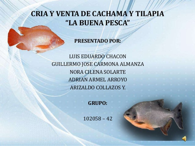 Trabajo final final for Cria de tilapia