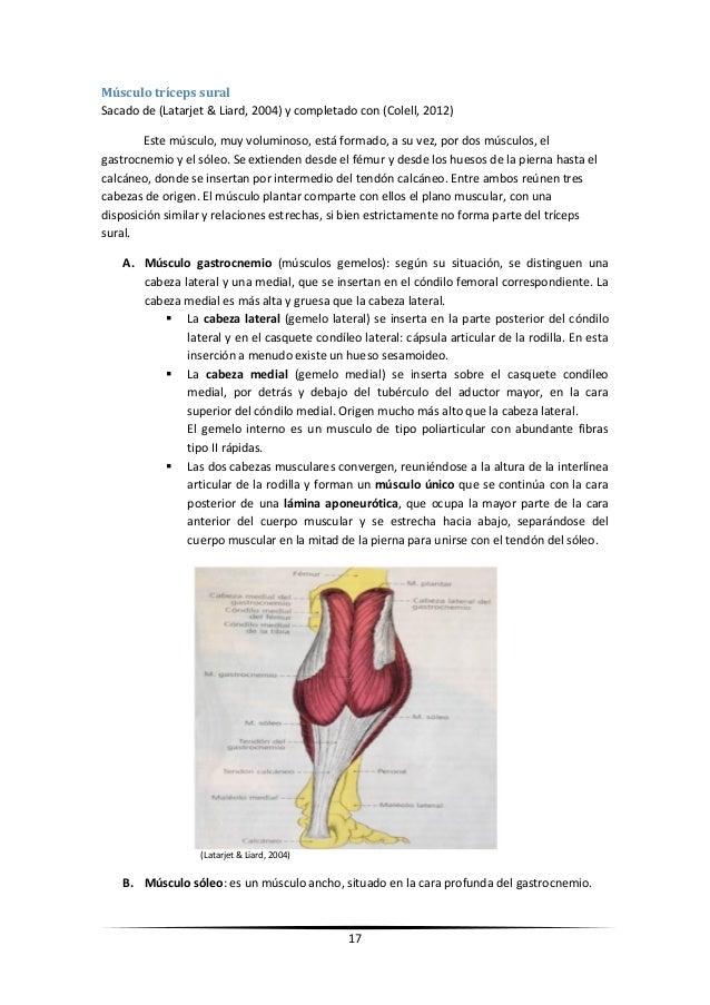 Reeducación funcional deportiva. Lesión muscular de la cabeza medial …