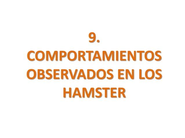 9.COMPORTAMIENTOSOBSERVADOS EN LOS    HAMSTER