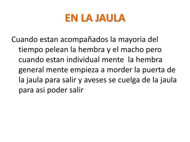 EN LA JAULACuando estan acompañados la mayoria del  tiempo pelean la hembra y el macho pero  cuando estan individual mente...