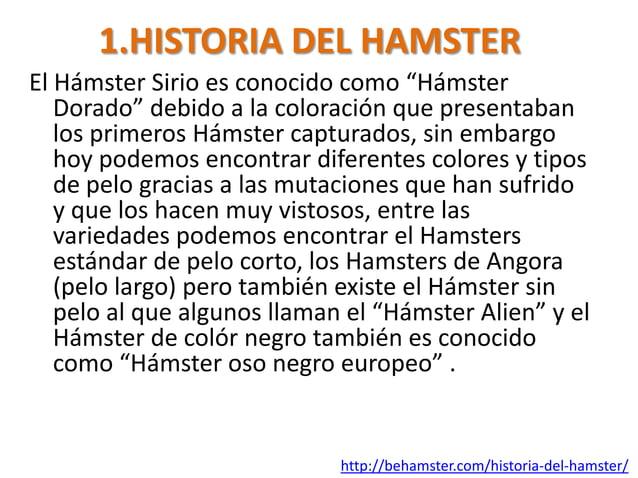 """1.HISTORIA DEL HAMSTEREl Hámster Sirio es conocido como """"Hámster   Dorado"""" debido a la coloración que presentaban   los pr..."""