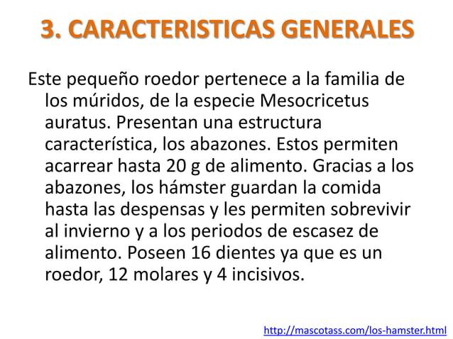 3. CARACTERISTICAS GENERALESEste pequeño roedor pertenece a la familia de  los múridos, de la especie Mesocricetus  auratu...