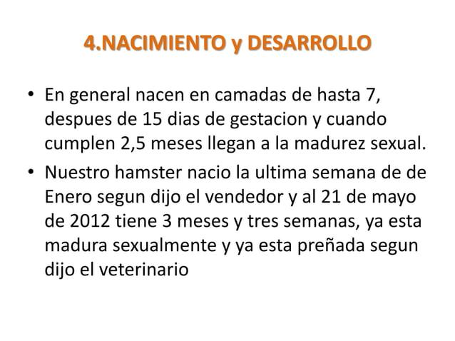 4.NACIMIENTO y DESARROLLO• En general nacen en camadas de hasta 7,  despues de 15 dias de gestacion y cuando  cumplen 2,5 ...