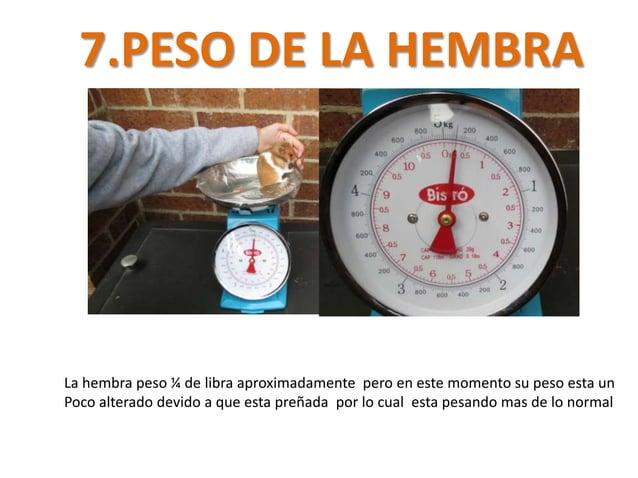7.PESO DE LA HEMBRALa hembra peso ¼ de libra aproximadamente pero en este momento su peso esta unPoco alterado devido a qu...