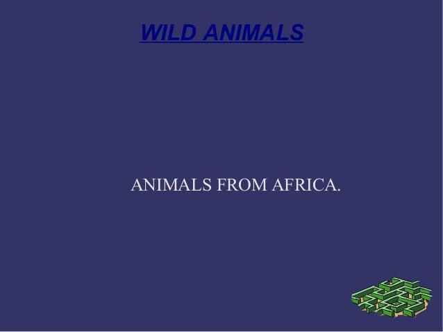 WILD ANIMALS ANIMALS FROM AFRICA.