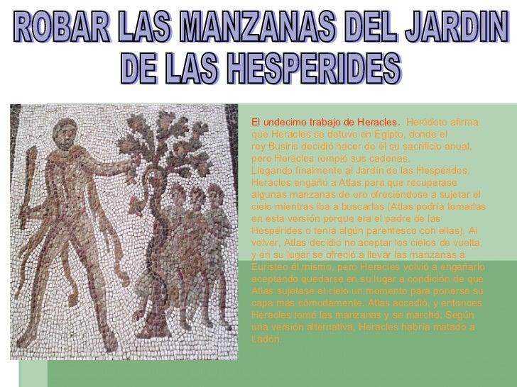 ROBAR LAS MANZANAS DEL JARDIN  DE LAS HESPERIDES El undecimo trabajo de Heracles.  Heródotoafirma que Heracles se detuvo ...