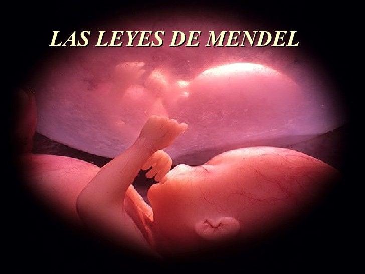 <ul><li>LAS LEYES DE MENDEL </li></ul>