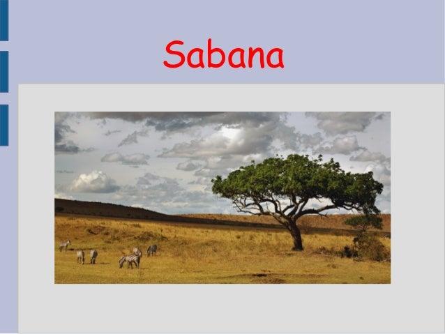 Sabana