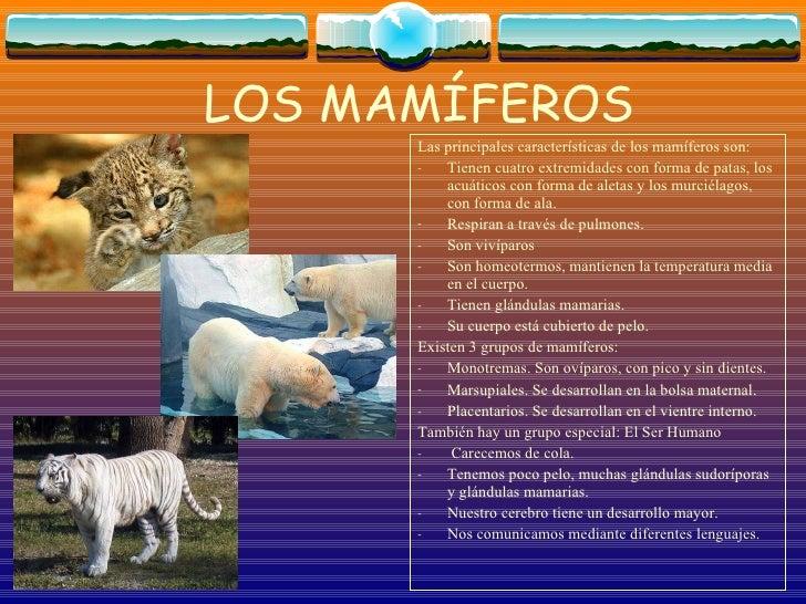 LOS MAMÍFEROS <ul><li>Las principales características de los mamíferos son: </li></ul><ul><li>Tienen cuatro extremidades c...