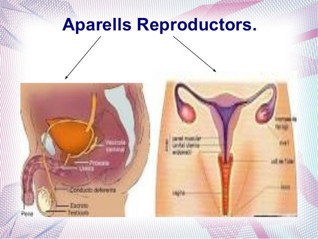 Aparells Reproductors.