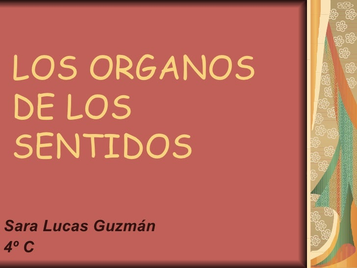 LOS ORGANOS DE LOS SENTIDOS <ul><li>Sara Lucas Guzmán </li></ul><ul><li>4º C </li></ul>
