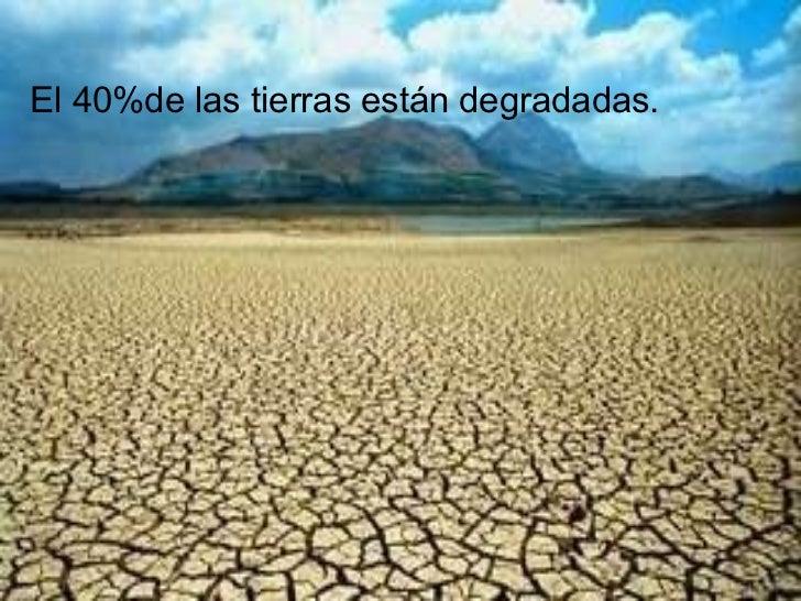 El 40%de las tierras están degradadas.