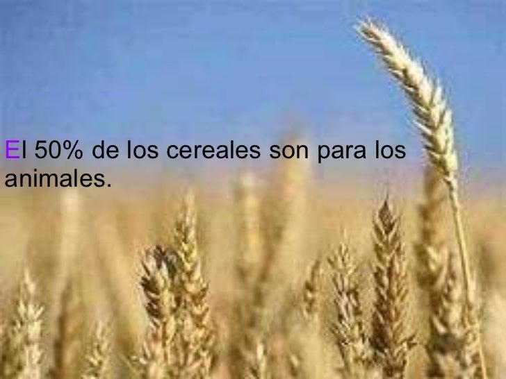 E l 50% de los cereales son para los animales.