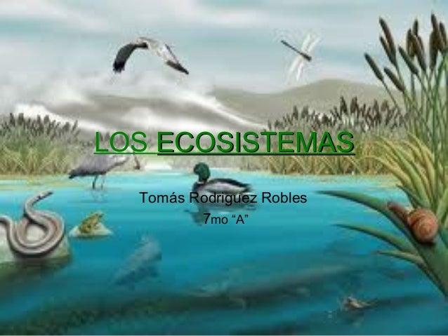 """LOS ECOSISTEMASECOSISTEMAS Tomás Rodriguez Robles 7mo """"A"""""""