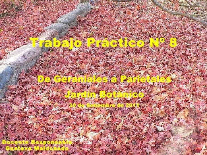 Trabajo Práctico Nº 8 De Geraniales a Parietales Jardín Botánico 30 de Setiembre de 2011 Docente Responsable Gustavo Maldo...