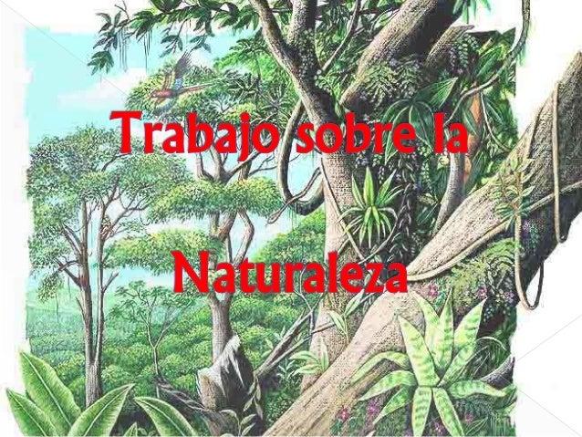  Portada  Índice  2 tipos de árboles  Lilo -Características -Requerimientos  Laurel -Características -Propagación  2...