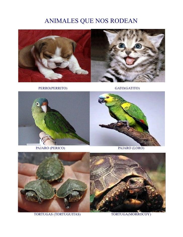 ANIMALES QUE NOS RODEAN  PERRO(PERRITO)          GATO(GATITO)PAJARO (PERICO)            PAJARO (LORO)TORTUGAS (TORTUGUITAS...