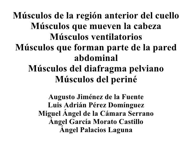 Músculos de la región anterior del cuello Músculos que mueven la cabeza Músculos ventilatorios Músculos que forman parte d...