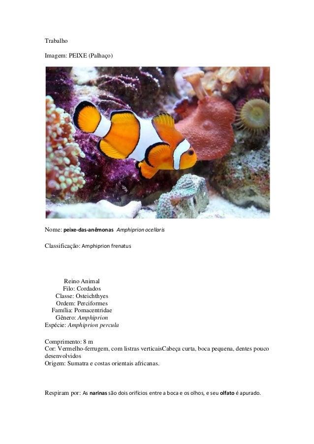 Trabalho Imagem: PEIXE (Palhaço)  Nome: peixe-das-anêmonas Amphiprion ocellaris Classificação: Amphiprion frenatus  Reino ...