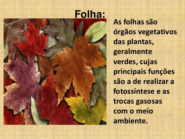 Folha:As folhas sãoórgãos vegetativosdas plantas,geralmenteverdes, cujasprincipais funçõessão a de realizar afotossíntese ...
