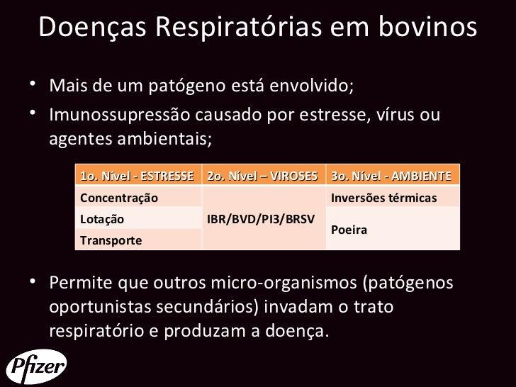 Doenças Respiratórias em bovinos• Mais de um patógeno está envolvido;• Imunossupressão causado por estresse, vírus ou  age...