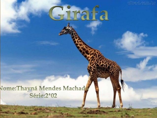  Reino: Animalia Filo: Chordada Classe: Mammalia Ordem: Artiodactyla Família: Giraffidae Gênero: Giraffa Espécie: G. Came...