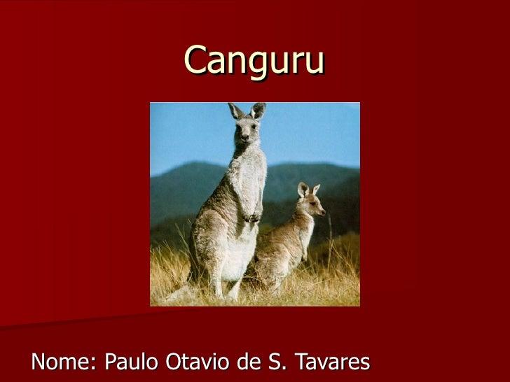 Canguru Nome: Paulo Otavio de S. Tavares