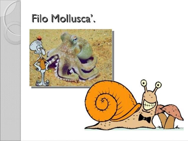 Filo Mollusca'.