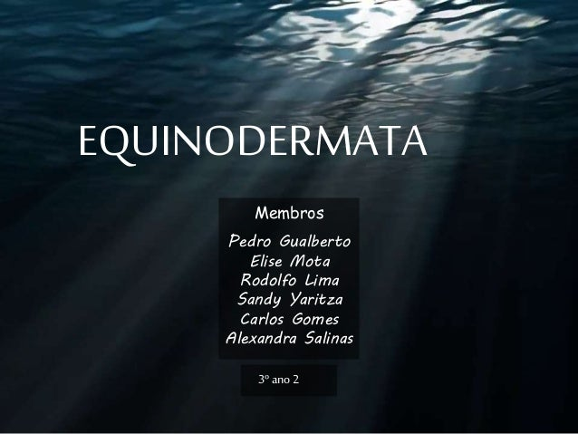 EQUINODERMATA Membros Pedro Gualberto Elise Mota Rodolfo Lima Sandy Yaritza Carlos Gomes Alexandra Salinas 3º ano2