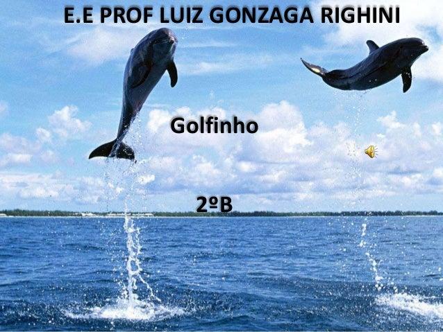 E.E PROF LUIZ GONZAGA RIGHINI Golfinho 2ºB