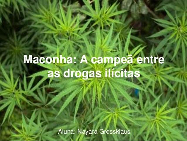 Maconha: A campeã entre as drogas ilícitas Aluna: Nayara Grossklaus