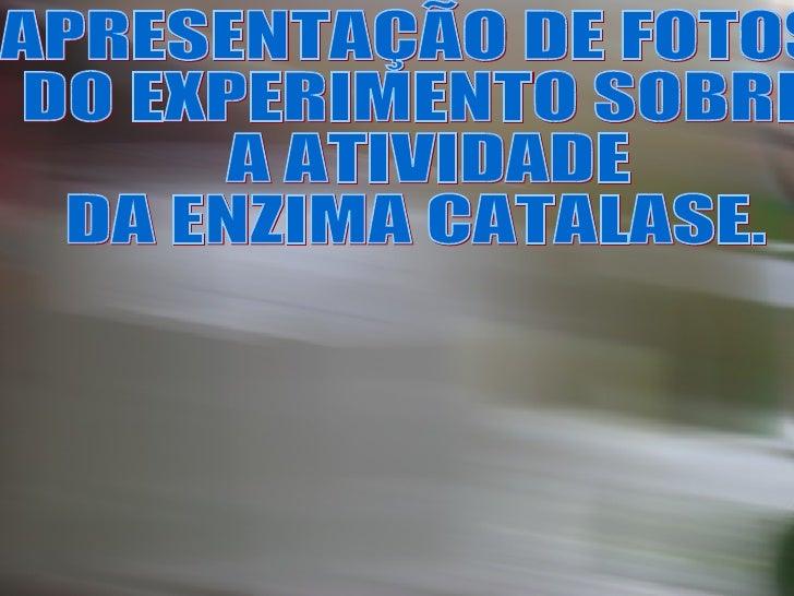 APRESENTAÇÃO DE FOTOS  DO EXPERIMENTO SOBRE A ATIVIDADE  DA ENZIMA CATALASE.