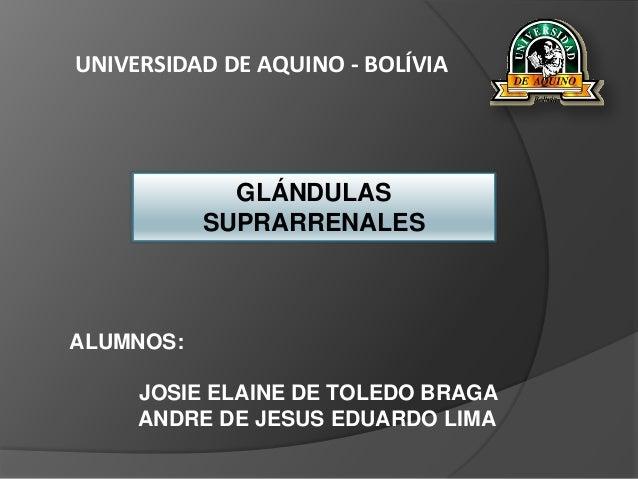 UNIVERSIDAD DE AQUINO - BOLÍVIA GLÁNDULAS SUPRARRENALES ALUMNOS: JOSIE ELAINE DE TOLEDO BRAGA ANDRE DE JESUS EDUARDO LIMA