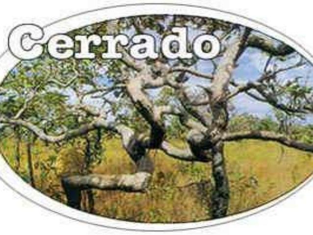 O que é o cerrado? • Cerrado é um tipo de ecossistema que existe na região central do Brasil ,em outros países esse tipo d...