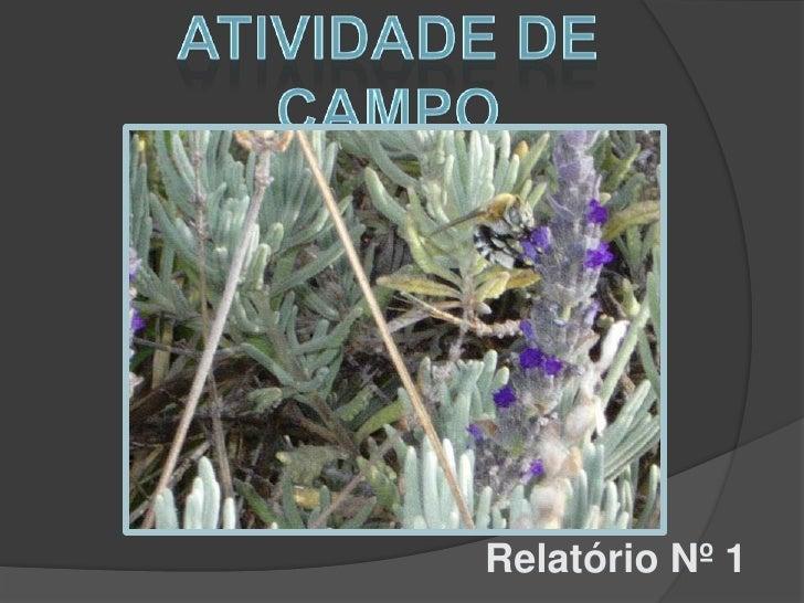 ATIVIDADE DE CAMPO<br />     Relatório Nº 1<br />